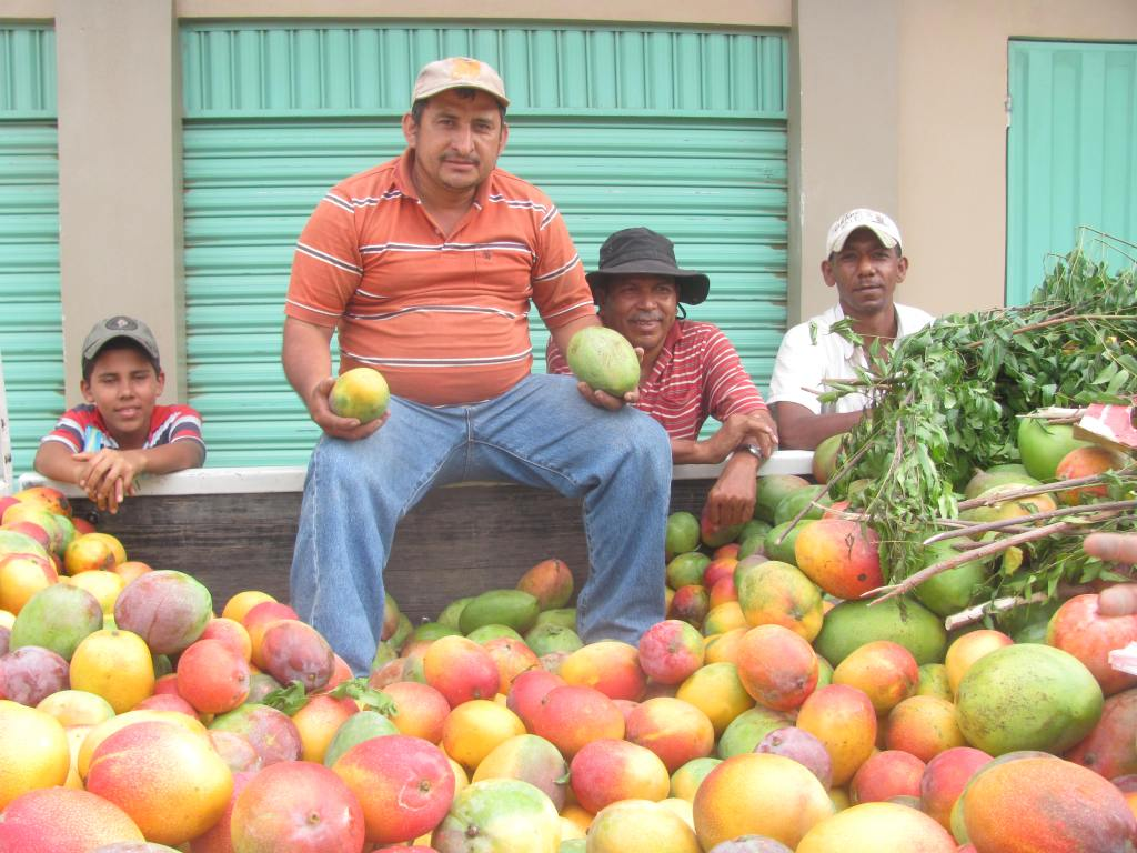 mangos hondureños